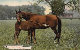 AR57 Animals - Horses At Large, Her Baby - Horses