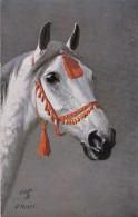 AR57 Animals - White Horse's Head, Artist O. Merte, Tuck Oilette - Horses
