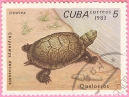 Cuba - Fauna - Turtle (5 C) - 1983 - Cuba