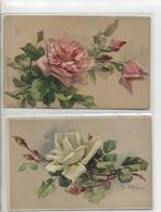 KLEIN - LOT DE 2 CARTES - ROSE BLANCHE ET ROSE- - Klein, Catharina