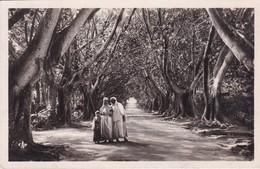 ALGER. FEMMES ARABES DANS LE JARDIN D'ESSAI. CAP. L & Y. CIRCA 1930's.-BLEUP - Vrouwen