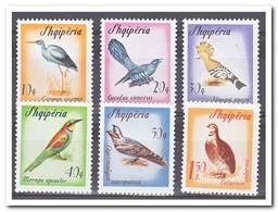 Albanië 1965, Postfris MNH, Birds - Albanië