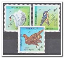 Wit Rusland 1994, Postfris MNH, Birds - Wit-Rusland