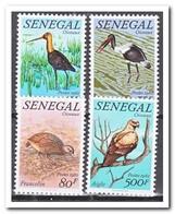 Senegal 1982, Postfris MNH, Birds - Sénégal (1960-...)