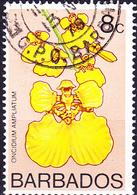 Barbados - Orchidee (Oncidium Ampliatum) (Mi.Nr. 370) 1974 - Gest. Used Obl - Barbados (1966-...)