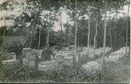 N°62474 -rare  Carte Photo Apiculteur -rûches- - Agriculture