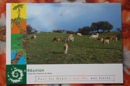 Reunion - Parc Les Hauts - Old Postcard - Cow - Reunion