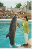 Animals - Dolphin, Dauphin, Delphin, Delfin, Delfino, Golfinho, Unused - Delphine