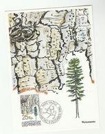 SILVER FIR TREE Liechtenstein Maximum Card Stamps Cover Fdc Trees - Trees