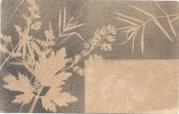 TRES JOLIE CARTE NON ECRITE . 1 COIN CORNE . 2 SCANES - Botanik