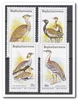 Bophutswana 1983, Postfris MNH, Birds - Bophuthatswana