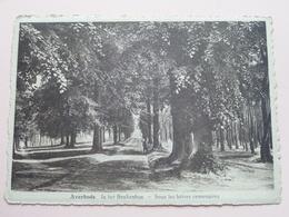 AVERBODE In Het Beukenbos ( Wouters ) Anno 194? ( Voir Photo Svp ) ! - Scherpenheuvel-Zichem