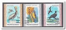Montserrat 1976, Postfris MNH, Birds - Montserrat
