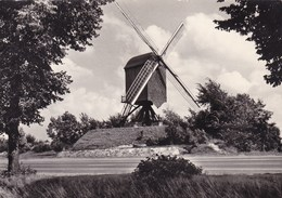 Diest De Linde Molen (pk46858) - Diest