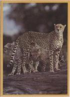 CPM - PUMAS - Edition Panthra Ltd - Kenya