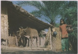 CPA - YOUNG FARMER - Edition ? - Bangladesh