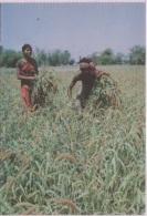 CPA - HARVESTING - Edition ? - Bangladesh