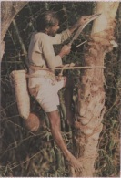 CPA - COLLECTING JUICE FROM DATE TREE - Edition ? - Bangladesh