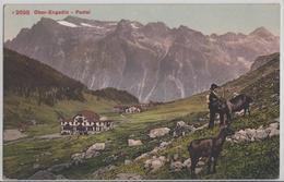 Ober-Engadin - Fextal, Ziegen Chevres Goat, Animee - Photoglob - GR Grisons