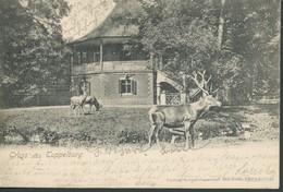 Tschechien - Eichwald   Hirsche Vor Der Tuppelburg   1903 - Tschechische Republik