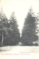 Leopoldsburg - Bourg-Léopold - CPA - Allée Des Soupirs - Leopoldsburg (Camp De Beverloo)