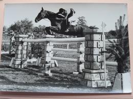 PAARDRIJDEN - HORSE RIDING  ( 2 Pcs / Stuks / Formaat +/- 17,5 X 12,5 Cm. - Géén Identificatie / Zie Foto's ) ! - Sports