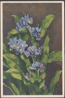 Myosotis Alpestris, Myosotis Des Alpes, 1946 - Stahli CPSM - Flowers