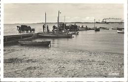 CPSM Port-des-Barques Débarquement Des Huitres Sur La Jetée - Otros Municipios