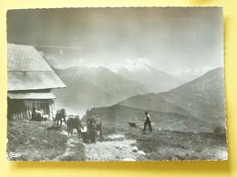 V05-BC-73-savoie-la Toussuire- Les Alpages--1960-animee-vaches--photo Veritable-- - Italia