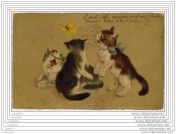 CATS - CHATS Avec Papillon - Gatti