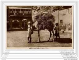 YEMEN - ADEN - Camel And Fuel Owners - Yémen