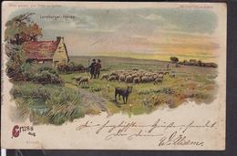 Halt Gegen Licht , Lüneburger Heide , Schaafe  1900 - Halt Gegen Das Licht/Durchscheink.
