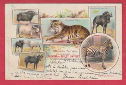 Cirque Barnum And Bailey Limited - Officielle Postkarte - Litho 3 - 1901 ( Voir Verso ) - Cirque