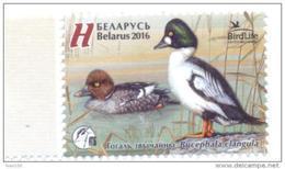 2016. Belarus, Bird Of The Year, Common Goldeneye, 1v, Mint/** - Belarus