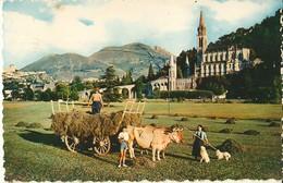 Lourdes-attelage De Boeufs-la Fenaison-cpsm - Teams