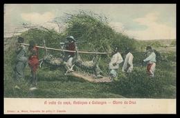 LUANDA  - MORRO DA CRUZ - CAÇA - A Volta Da Caça, Antilopes E Golungos.( Ed. A.Biker, Deposito De Gello) Carte Postale - Angola
