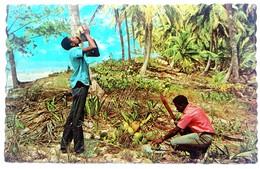 #313   Coconut Palms,  Refresing Coconut Milk - TROPICAL CARIBBEAN  Islands - US Postcard - Postcards