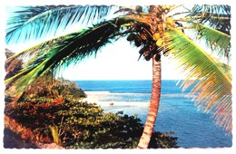 #313   Coconut Palm Beach Sea - TROPICAL CARIBBEAN  Islands - US Postcard - Postcards