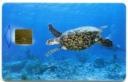 Bonaire - Telefonia Bonairano AN-BON-TBO-0008B - Sea Turtle (Chip GEM1B White) - Antilles (Netherlands)