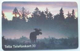 Animal , Moose  , Sweden - Suède