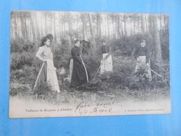 Carte Postale Tailleuses De Bruyères Landes - Farmers