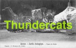 CPA ANTWERPEN ZOO  ANVERS JARDIN ZOOLOGIQUE TIGRE DE PERSE - Antwerpen