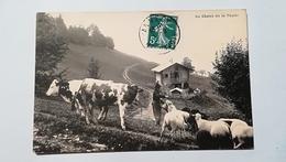 74- SALEVE - CHALETS DE LA THUILE - Autres Communes