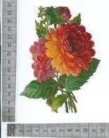 CHROMO DECOUPIS GAUFRÉE / FLEURS DE DAHLIA - Flowers
