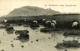 VALENCIA CULLERA SIEGA DEL ARROZ - Valencia