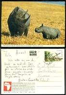 Kenya Ansichtkaart Zwarte Rhinoceros - Kenya