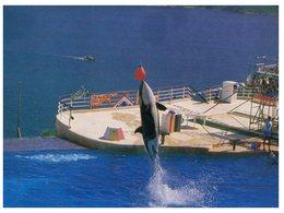 (120) Orca At Hong Kong Ocean Park - Fish & Shellfish