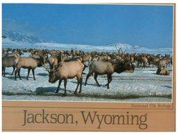 (31) USA - Elk - Stieren