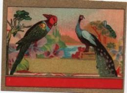 """Etiquette Ancienne Chromo Anglais /Produit D'hygiéne /""""Perroquet Et Paon """"/non Personnalisée/Vers 1890-1910  PARF131 - Chromos"""
