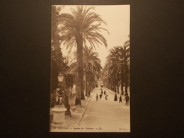 Carte Postale -  HYERES (83) - Avenue Des Palmiers (2290) - Hyeres